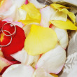 Rings  on roses petals — Stock Photo