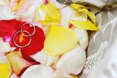 Ringar på rosor kronblad — Stock fotografie