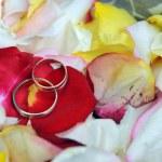 anéis em pétalas de rosas — Foto Stock