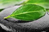 Piedras y hojas verdes — Foto de Stock