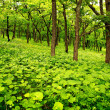 Young spring forest - Stock Photo