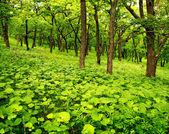 若い春の森 — ストック写真