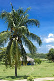 Hut and palm tree in Cienfuegos. — Stockfoto