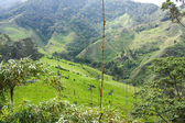 Cocora valley. — Stock Photo