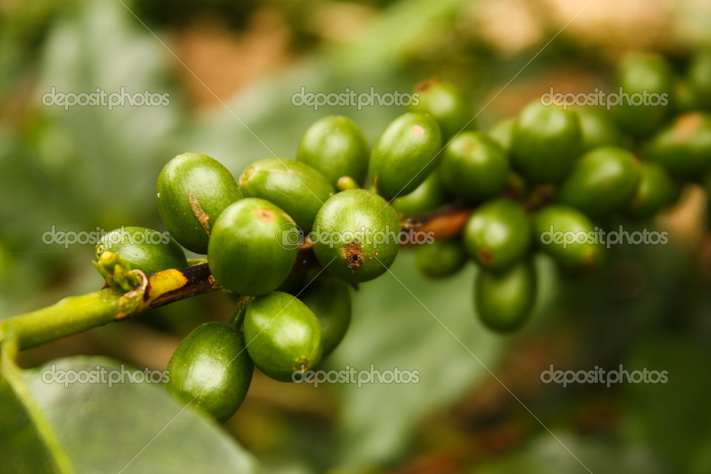 Colombian coffee plantation in the Andean valleys. Quimbaya, Quindio, Colombia. Triangle coffee. — Stock Photo #10406923