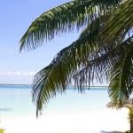 Palm in Beach of Cayo Santa Maria. — Stock Photo #8049889