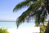 Palm in Beach of Cayo Santa Maria. — Foto Stock