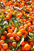 Fruit orange closeup — Stock Photo