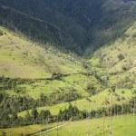 Cocora valley. — Stock Photo