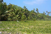 Forêt tropicale le long de la mer des Caraïbes — Photo