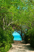 Pathway in green forest to the beach — Stock Photo