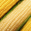 Stock Photo: Corn cob