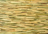Wheat ears at sunny day — Stock Photo