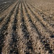 Sowing time - Stockfoto