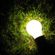 Bulb lamp glowing in the grass - Stock Photo
