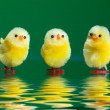 Stock Photo: Decorative chicks