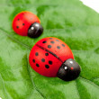 Ladybugs on the leaf, family concept — Stock Photo