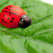 Ladybug on the leaf — Stock Photo