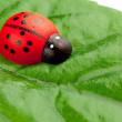 Ladybug on the leaf — Stock Photo
