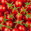 Multitude of cherry tomatoes — Stock Photo #10234357