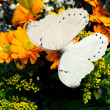 Photo: Butterfly and flowers