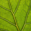 Green leaf texture — Stock Photo #10235783