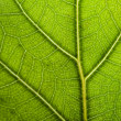 Green leaf background — Stock Photo #10235806