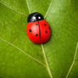 Stock Photo: Ladybug on the leaf