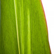 Stock Photo: Green leaf background