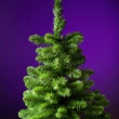 Christmas tree without decorations — Stock Photo