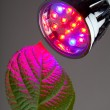 Stock Photo: LED light for plant growing