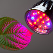 LED light for plant growing — Stock Photo #10236369