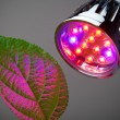 LED grow light — Stock Photo #10236387