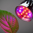 Stock Photo: LED grow light
