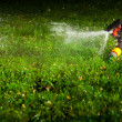 Lawn sprinkler spraying water over green grass at night — Stock Photo #10236431
