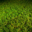 Green lawn — Stock Photo #10236484