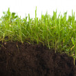 Green grass with earth crosscut — Stock Photo