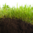 Green grass with earth crosscut — Stock Photo #10236785