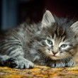 Pretty kitten — Stock Photo