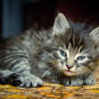 Pretty kitten — Stock Photo #10237391