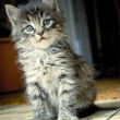 Cute kitten — Stock Photo #10237402