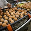 Eggs production line - 图库照片