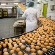 Stock Photo: Eggs production line