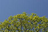 зеленая листва на синем фоне — Стоковое фото