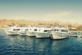 Group of white yachts moored at sunny bay — Stock Photo