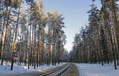 Magic forest in winter — Stock Photo