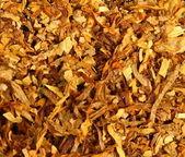 Tobacco texture — Stock Photo