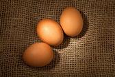 鸡鸡蛋 — 图库照片