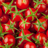 Multitude de tomates cerises — Photo