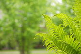 Natural green background with rain — Stock Photo